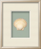*Exclusive* Irish Deep Shell Shadowbox - Seafoam