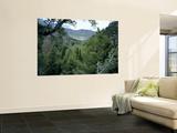 Mountain Mahagony & Conifers in Canyon of Goshute Creek  Goshute Canyon Wilderness  Nevada  USA