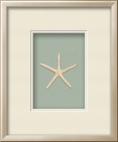 *Exclusive* Starfish Shadowbox - Seafoam