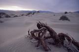Death Valley Tree  California