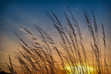 Prairie Grass Sunset