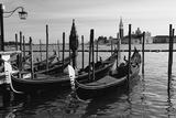 Gondolas of St Marks Square  Venice  Italy