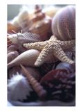 Tropical Shells Papier Photo par Michele Wesmoreland