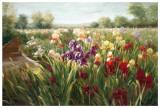 Fields of Iris Reproduction d'art par Ian Cook