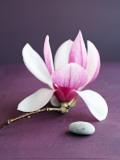 Magnolia et Caillou
