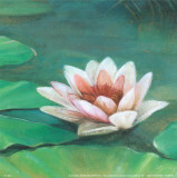 Waterlily II