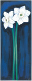 Narcissus In Blue II