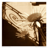 Sepia Flower