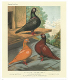 Cassell's Pigeon Book II