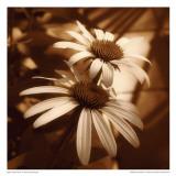 Sepia Flower