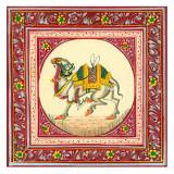 Tibetan Camel
