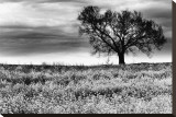 Tree in a Field  Severville  Tennessee