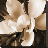 Magnolia Close Up I