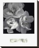 Rose for Romance I