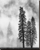 Yosemite Misty Pines Black and White