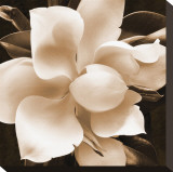 Magnolia Close Up II