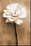 White Rose in Sepia