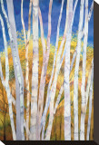 Serene White Birches