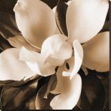 Magnolia Close Up I