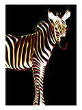 Zebra in Black Vertical