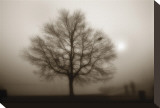 Lone Tree Sepia