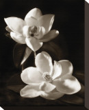 Magnolia II