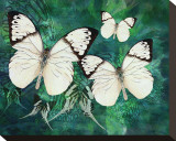 White Butterfly Fantasy