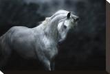 Moonlight Silver Stallion