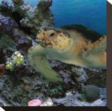 Sea Turtle III