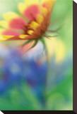 Blanket Blur