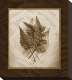 Japanese Painted Fern Study II Sepia