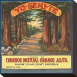Yo-Se-Mite Oranges