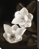 Magnolia I