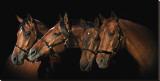 Family of Horses
