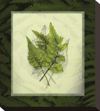 Japanese Painted Fern Study II