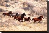 Mustang Horses Running  Wyoming