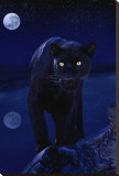 Black Panther in Moonlight