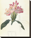 Rhodendron