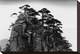 Stange Pines  Huangshan  China