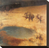 Reed Bed Pond