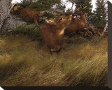 Deer Panic