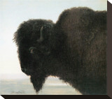 Bison Head