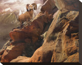 Rocky Bighorn