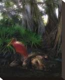 Spoonbill Plight