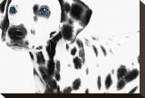 Dalmatian Date II