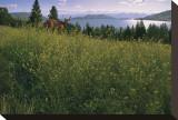 Lake Deer