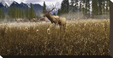 Misty Elk