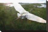 Everglides