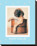 Bucket Dweller