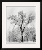 Oak Tree  Snowstorm  Yosemite National Park  1948